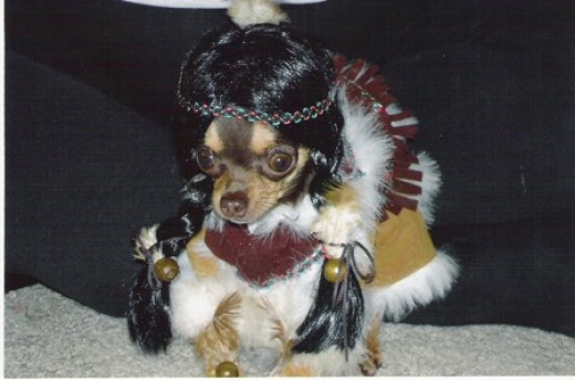 Halloween Costume for Dogs