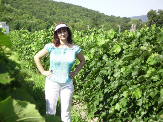 Bella in the vineyard of the Widmer Winery outside of Naples, New York.