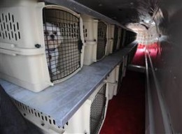 Pets waiting to take off in the spacious Pet Airways cabin.  Photo courtesy of MSN.com.