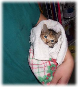 """And this is considered volunteer """"work""""?  Don't you feel better already just looking at the cute kitten?"""