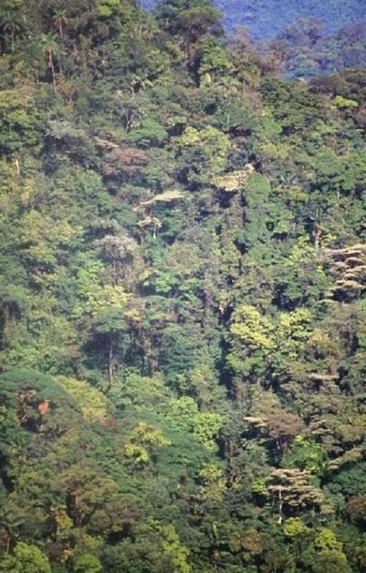 Photo -Mountain Jungle