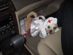 A Dog's & Her Master's Trick or Treat Adventure