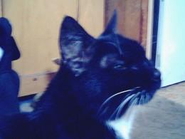 I love you my dear Kitty cat