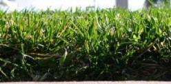 My Zoysia Lawn - How to Have a Beautiful Zoysia Grass Lawn for Your Home