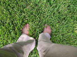 Lawn Reseeding - Grass Revival In the Works