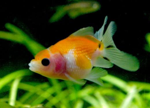 Aquatic Animals Related Keywords & Suggestions - Aquatic Animals Long ...
