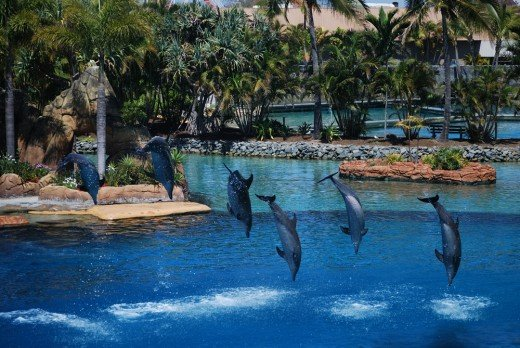 The stars at Sea World - dolphin