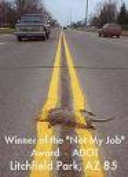 """Trouble is, we do """"paint over"""" all the deaths of wildlife on our roads.  Sow down is best.      wierdwebsites photo"""