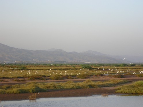 Migratory birds at the Jhelum River.  The salt range can be seen in the background.