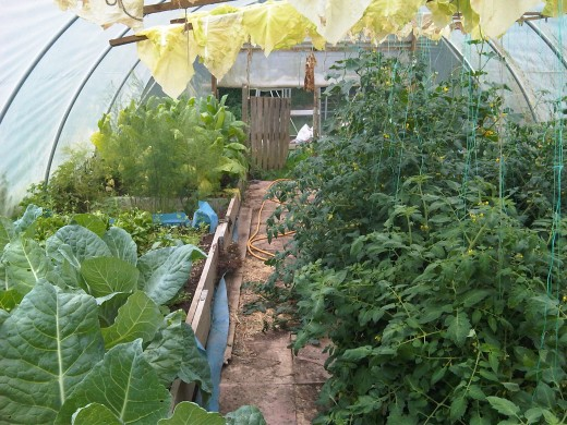 My Own Polytunnel