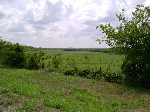 Typical Cross Timbers landscape.
