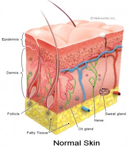 picture of Skin layers compliments of http://www.medicinenet.com/skin_cancer/article.htm#tocb