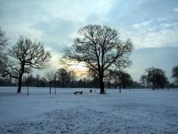 A Scene of Winter