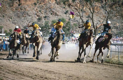 The Camel Cup is a very popular event held in Alice Springs every year.