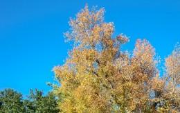 A clear fall sky.