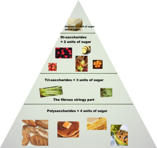 The Sugar Absorption Pyramid