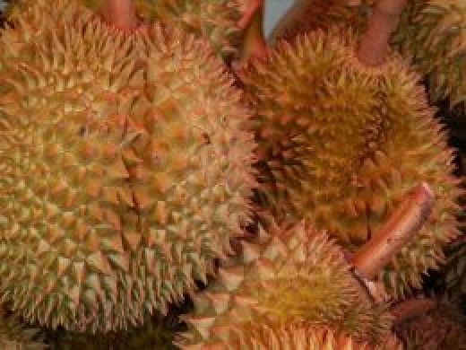 Durian, the King of the Exotic Fruits