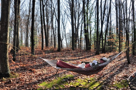 A nice afternoon for a late fall nap on the hammock. The cat joined me. I awoke to two hawks hunting above the trees to the east where I'm facing.