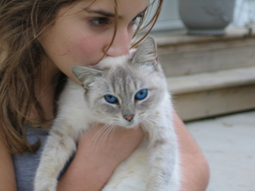 Mutual love between a girl and her blue-eyed cat.  (Photo by Ginger Garvey)