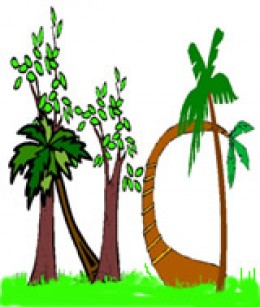 """The Rooted Trees of """"No"""""""