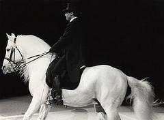 The wonderful Lipizzaner horse
