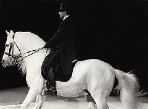 The wonderful Lipizzaner horse