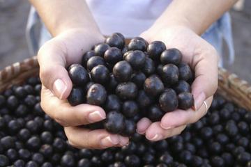 Acai Berry Benefits