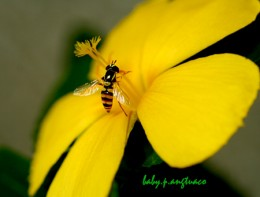 side view of bee