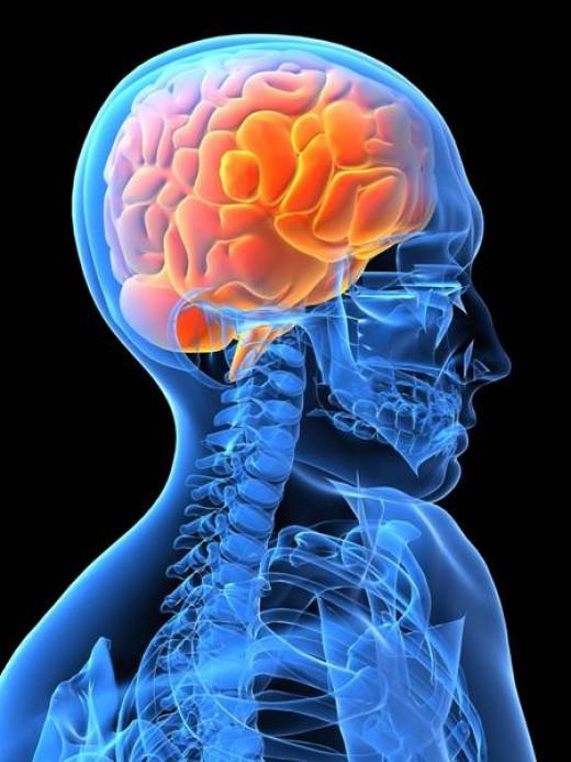 Mercury exposure can cause brain damage.
