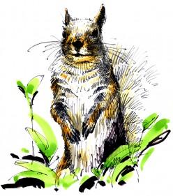 Our Suburban Friend, the Squirrel
