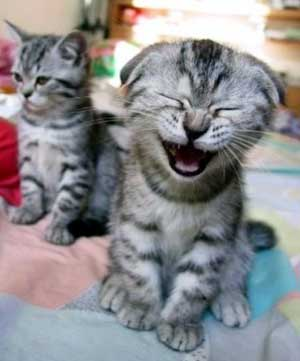 You told a good joke, considered your audience, and laughter is your reward!