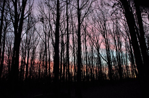 This morning's dawn filled the eastern sky, as seen through the woods from a vantage of my front porch, with color.