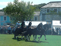 A dashing Pair of Welsh Cobs.......All photos courtesy of Flickr