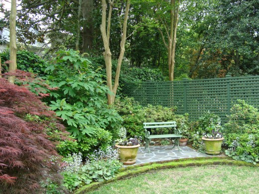 The hydrangeas are just behind and to the right of the red maple and to the left of the crape myrtle tree trunk.