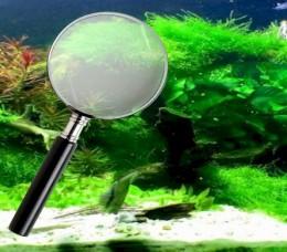 Algae Invasion