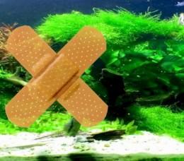 Get Rid Of Algae..