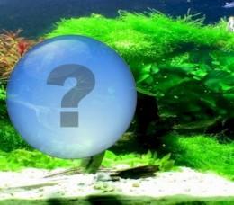 What Causes The Algae Problem