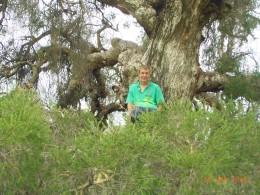 Sitting in a tree in our backyard feeling good