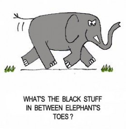 Elephant jokes - photo#21