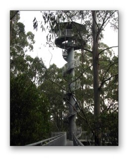 Tower on the Sky walk in the Otways