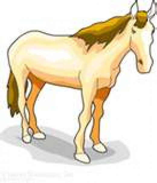 I like to think of myself as a horse of a different color.