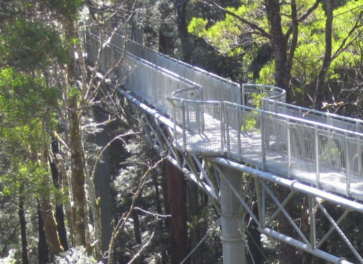 Try the Otway Fly walk if you have the courage.
