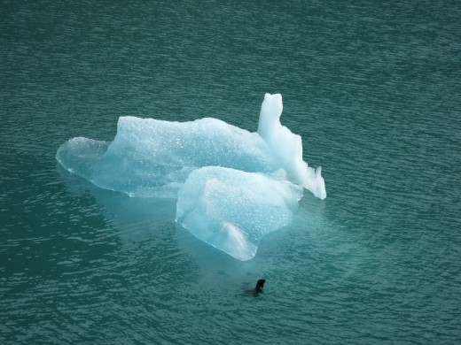 A seal next to an iceberg