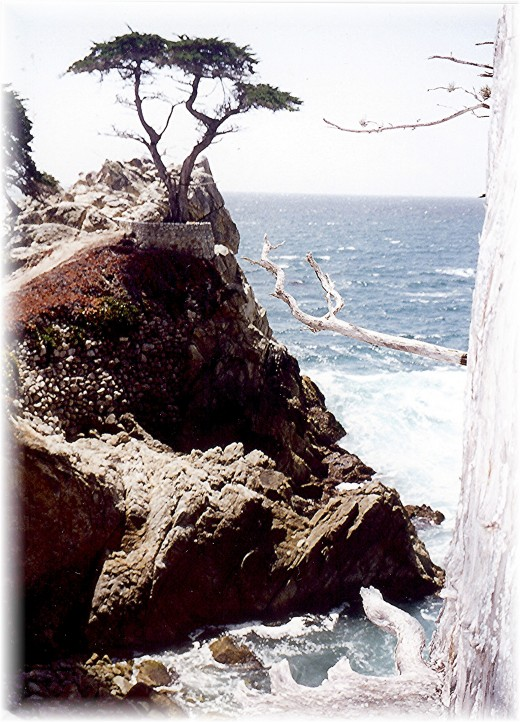 Another view of the Lone Cypress along the 17 Mile Drive in California.
