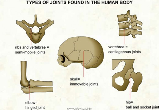 Movements Allowed By Synovial Joints. A joint can be defined as