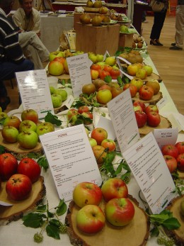 Apples and pears are an important part of the Limousin economy