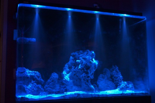 This aquarium is lit with lunar LED lights.