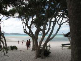 Beach on Whitsunday Island.