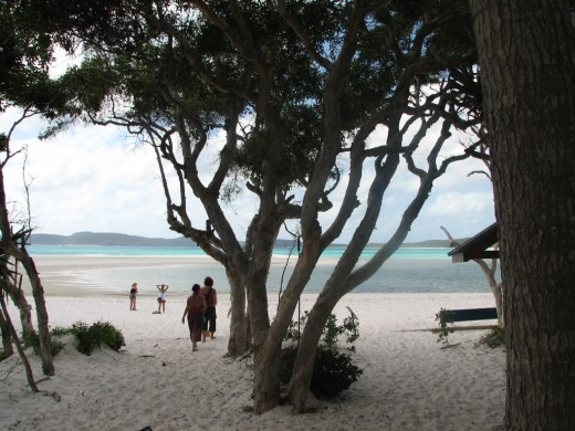 Beach on Whitsunday Island.