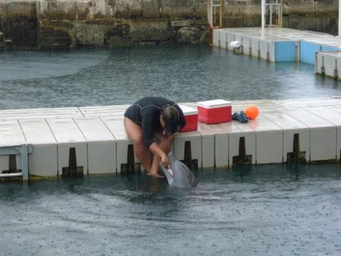 2]Feeding a Dolphin.
